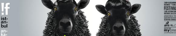 Die Schafe sind genial!